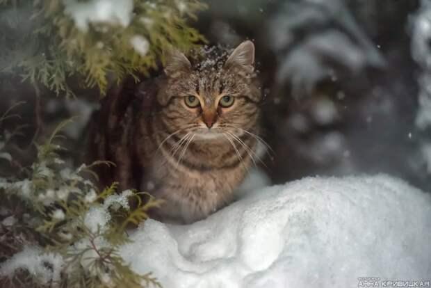 Умоляем, помогите спасти несчастных из этого кошачьего ада!!! Нам очень нужны ХОТЯ БЫ передержки для тех, кто остаётся в садоводстве.