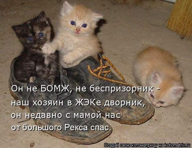 1451737536_kotomatricy-25