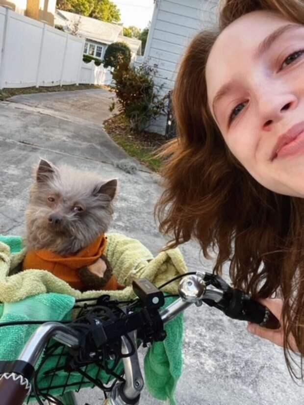 Девушка взяла из приюта странного песика, которого постоянно путают с другими животными