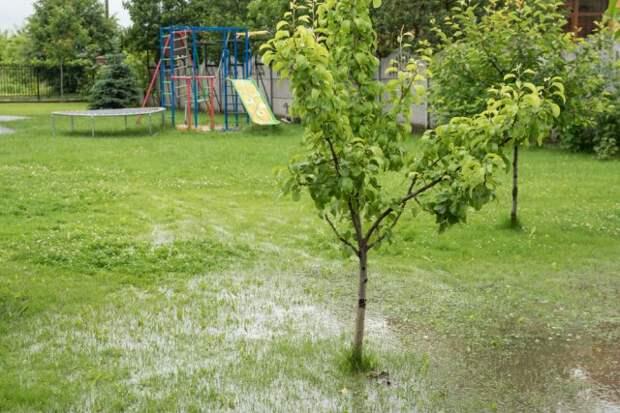 Как вырастить деревья на болоте: технология посадки, виды и сорта