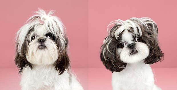 9 фото милых песиков до и после стрижки