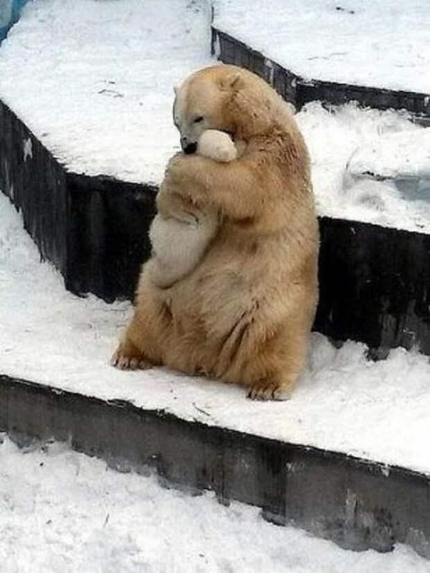 Мамина любовь в Новосибирском зоопарке