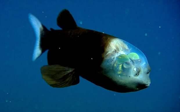 Фантастические твари: прозрачные животные, в существование которых верится с трудом необычные организмы, природа, удивительное
