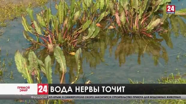 Ушли под воду. После очередных дождей улицы посёлка Приморский снова затопило