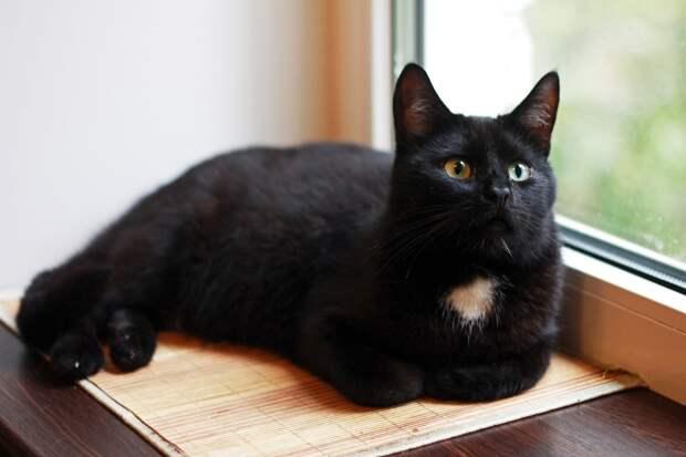 Самый ласковый, самый озорной, самый, самый лучший котик срочно ищет дом! Вы ведь именно о таком мечтали!