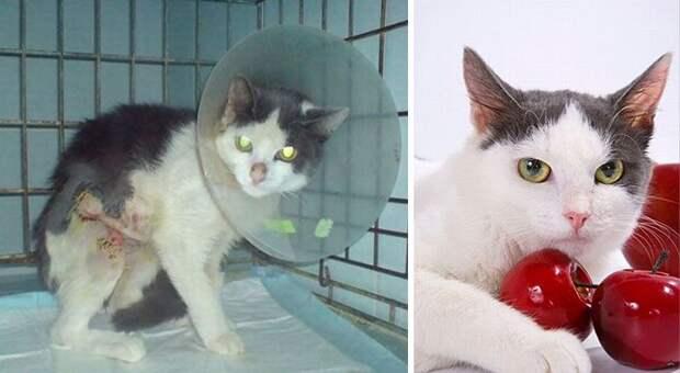 Твори добро: кошки до и после того, как их подобрали с улицы