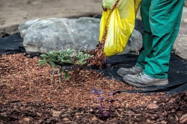 Как использовать хвою на садовом участке: 10 способов применения