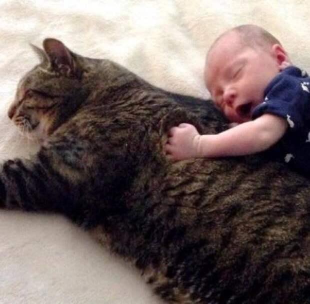 Этот большой и пушистый кот охраняет сон ребенка своих хозяев и очень его любит
