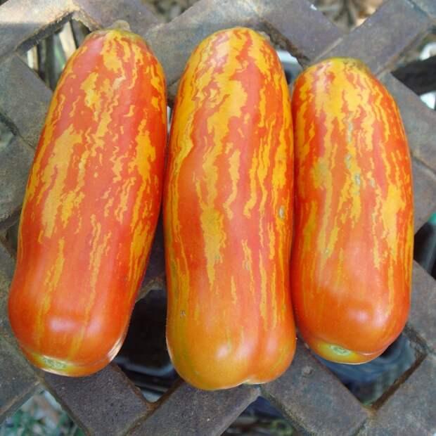 Советуем посадить фляшен томаты эротической формы