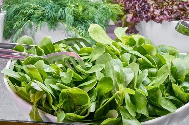Звездный рецепт: салат со шпинатом от Дмитрия Варшавского