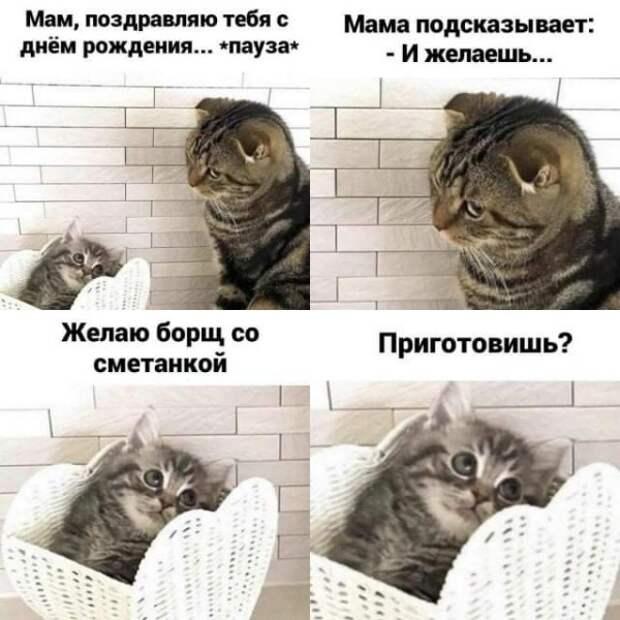 Пятничные котики.