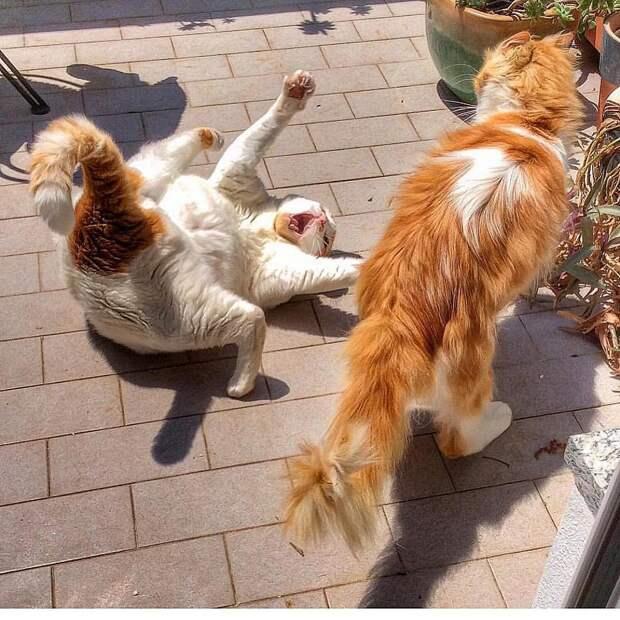 Итальянка фотографирует жизнь своих котов