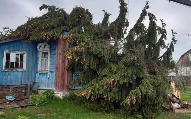 В Полянах из-за урагана ель упала на жилой дом