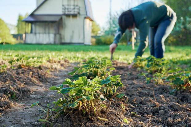Что ждет дачников и садоводов в новом сезоне