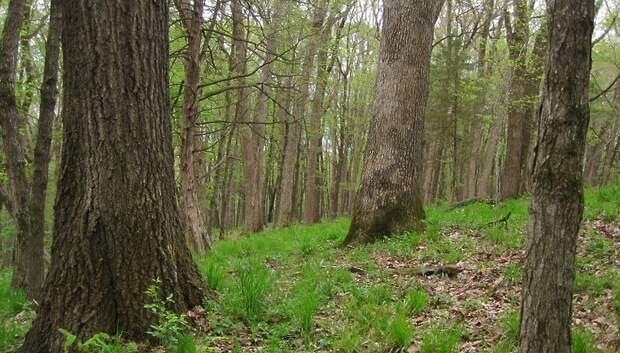 I класс пожарной опасности ожидается в лесах Подмосковья 27–28 мая