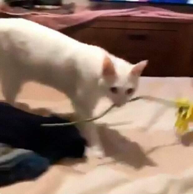 30 странных кошачьих привычек, которые для них впорядке вещей