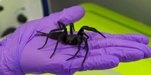 Приручить птицееда: как ученые к паукам за лекарством ходили