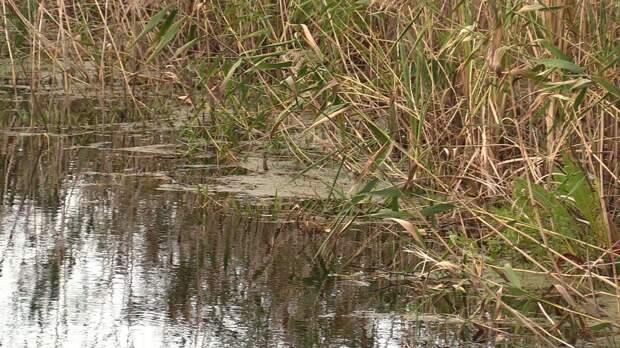 Добровольцы спасли оставшихся без связи школьников на реке под Рязанью