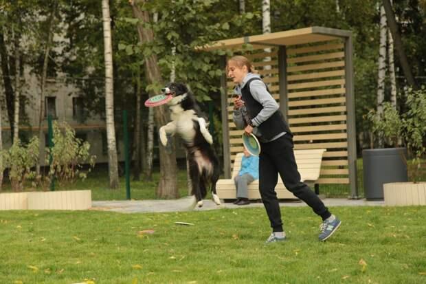 Видео: чемпион Европы Веник приступил к тренировкам на собачей площадке в Анадырском