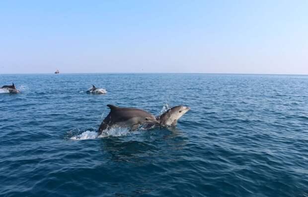 Рыболовные сети стали основной причиной гибели черноморских дельфинов