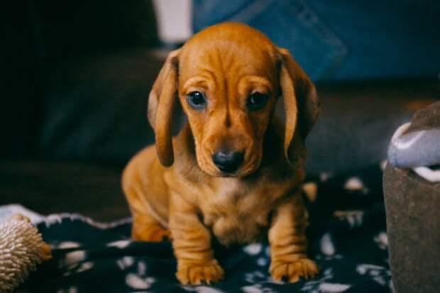 Умный не по годам щеночек