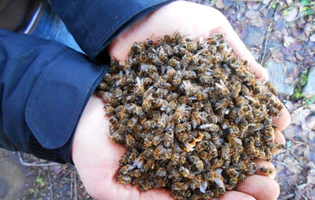 В Башкирии произошла массовая гибель пчел