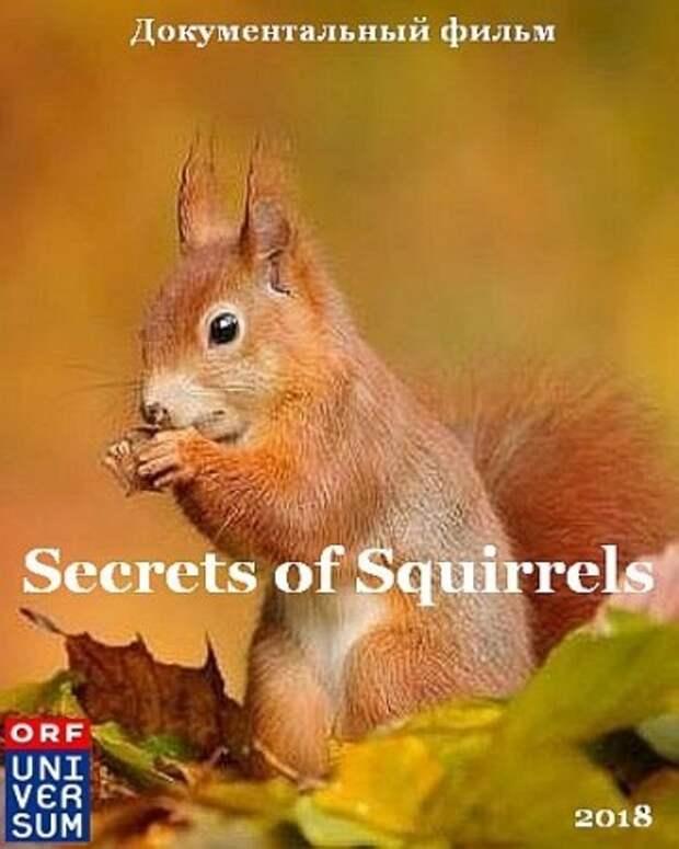Беличьи секреты / Secrets of Squirrels (2018)