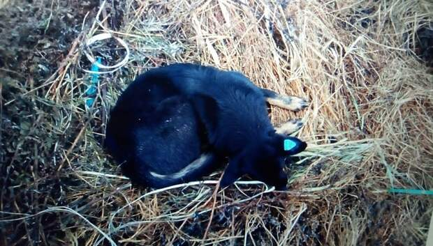 Двух бездомных собак отловили в поселке Кузнечики по просьбе жительницы