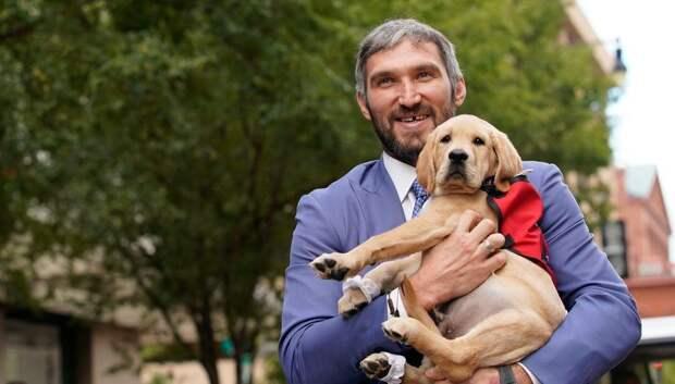 Клубный пес «Вашингтона» покинул команду. Он подошел к завершающей стадии становления служебной собакой