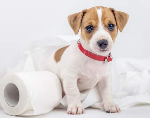 Туалет на улице: приучаем щенка справлять нужду в нужном месте