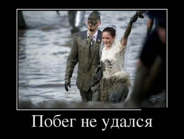 Демотиваторы на каждый день для всех! | Веселые свадьбы, Смешно ...