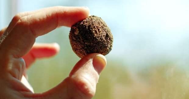 Шарик из семян