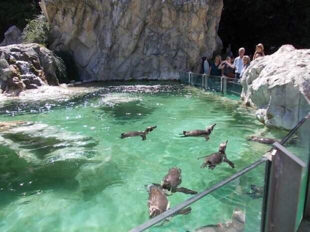 Зоопарк в Вене — самый старый в мире