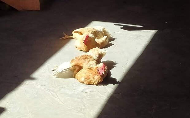 ☀️ Эти 10 домашних животных радуются солнцу, как мы — отмене карантина