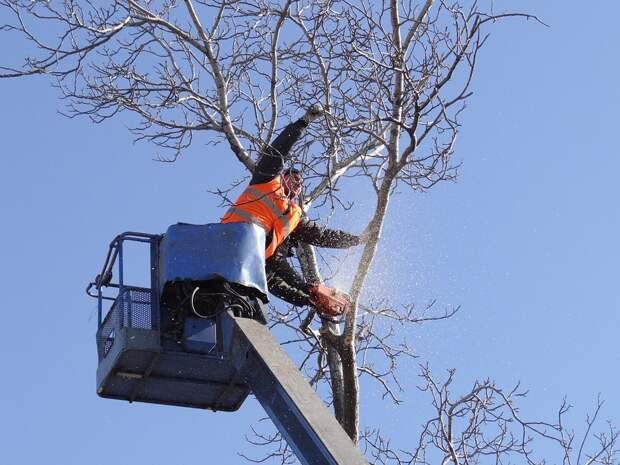 На Верхоянской вывезли спилы деревьев по просьбе жителей