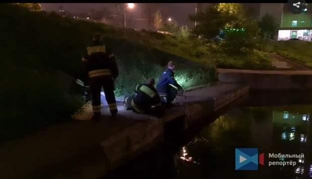 Из пруда на Мячковском бульваре спасли собаку