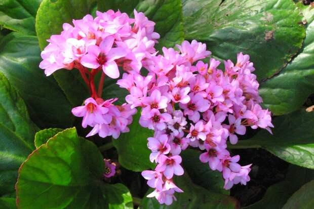 Какие лечебные растения заготавливают весной