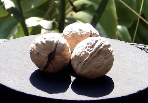 Чистим миску грецких орехов: с кило получили больше 500 граммов