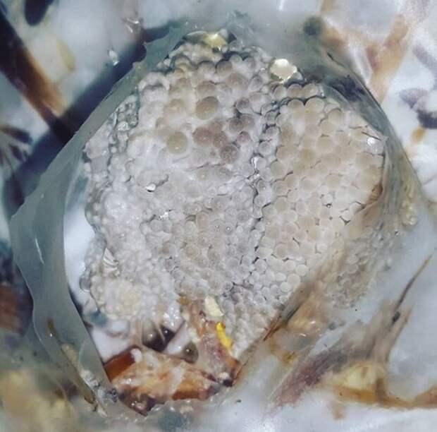 Эксперимент Как вырастить грибы в домашних условиях Простой рецепт выращивания грибов вешенки