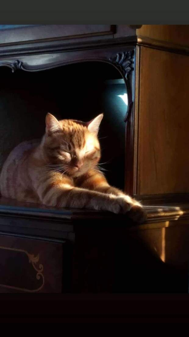 Трое солнечных котят родились в тёмном сыром подвале, но надолго в нём не остались