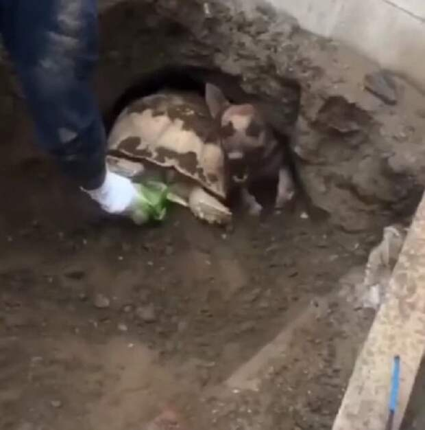 Пес и черепаха в лазейке