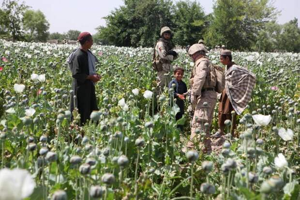Дары свободы: потери от наркомании на постсоветском пространстве
