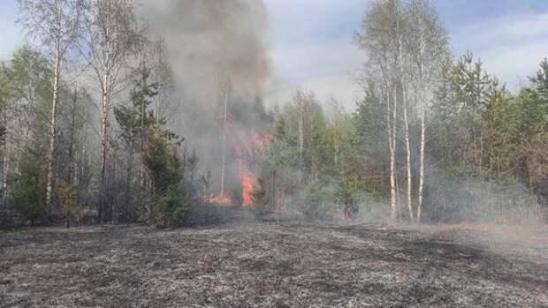 Вологжанин получил ожоги на пожаре площадью 620 тысяч квадратных метров
