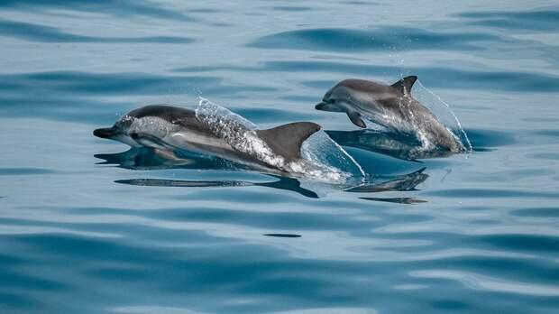 Свистящие языки помогут создать модели дешифровки языка дельфинов