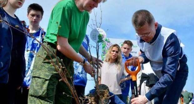 Более 316 тысяч деревьев и кустарников высадили в Подмосковье в память о героях ВОВ