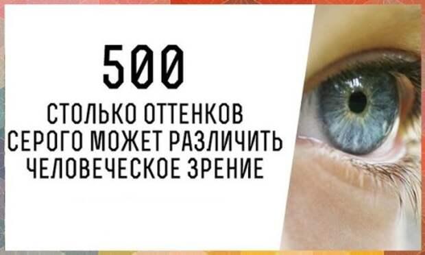 Человеческий глаз может различить 500 оттенков серого