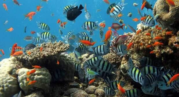 Десятка основных правил ухода и обслуживания аквариума в домашних условиях