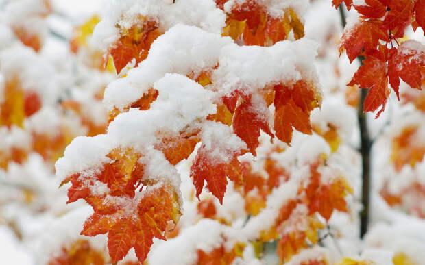 В Москве выпал первый снег 18 октября