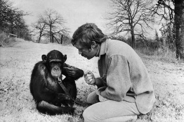 Чем закончились попытки ученых научить приматов разговаривать