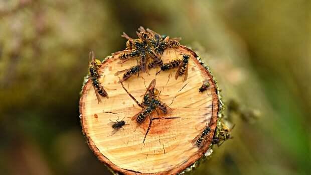 Немецкие зоологи сделали посвященное эволюции насекомых открытие